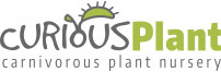 Curious Plant Logo