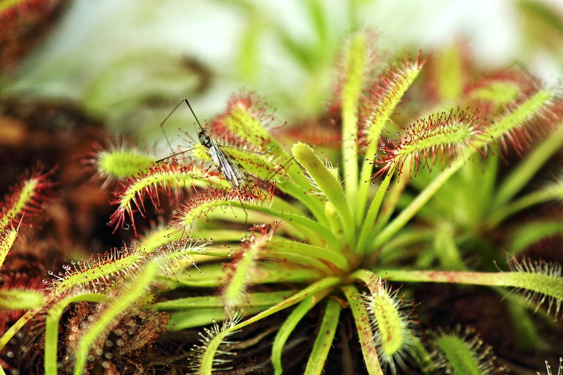 What To Feed Carnivorous Plants