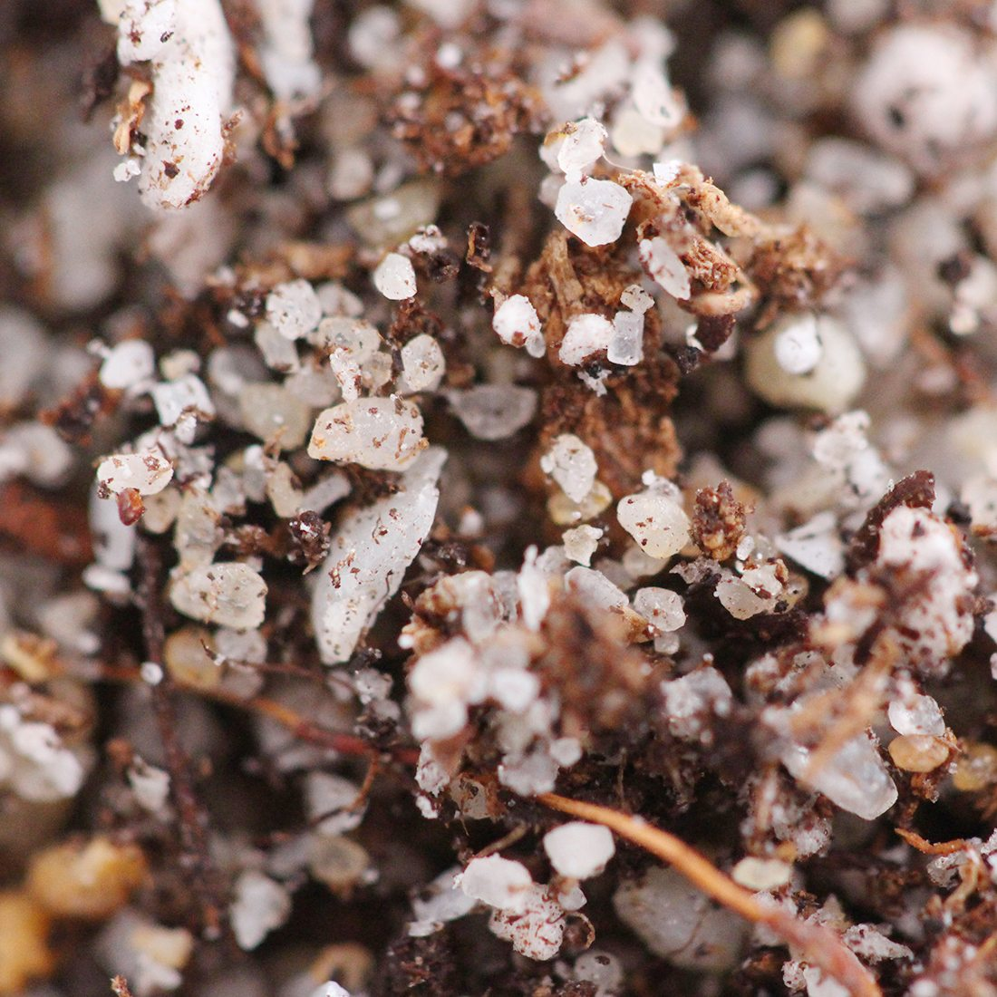 Carnivorous Plant Soil Mix