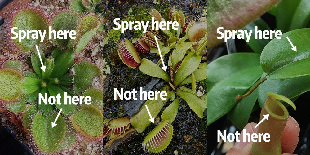 Where To Spray Pesticides and Fungicides