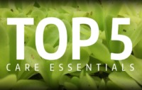 Top 5 Carnivorous Plant Care Essentials