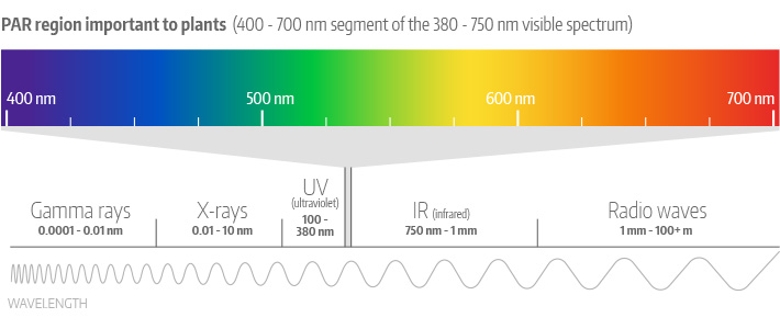 PAR Region of the Electromagnetic Spectrum