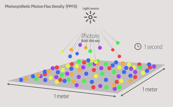 Photosynthetic Photon Flux Density (PPFD)