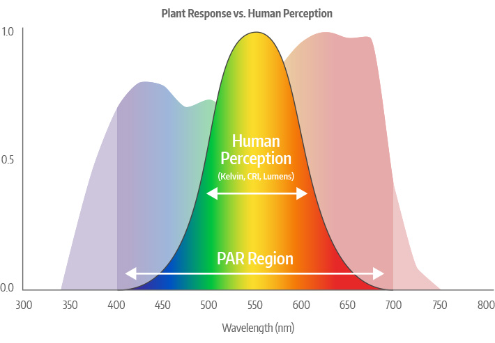 Plant Response vs. Human Perception