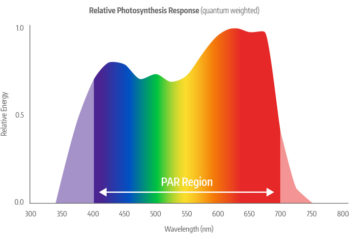 Relative Photosynthetic Response Curve (Quantum Weighted)