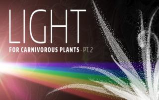 Light Carnivorous Plants