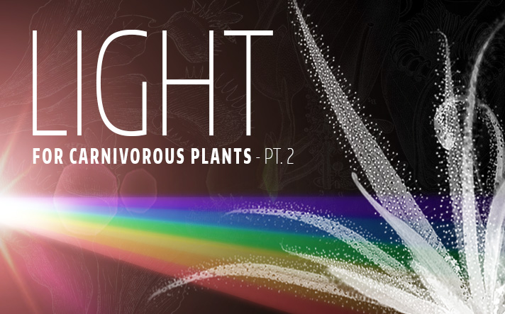 How much light do carnivorous plants need? - Part 2 | Curious Plant