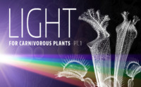 Light Type Carnivorous Plants