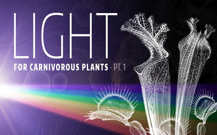 Light Type Carnivorous Plants