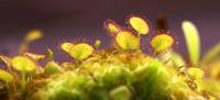 Carnivorous Plant Information Resources