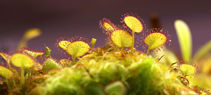 Carnivorous Plant Information Resources